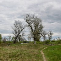 Два дерева :: Марина Ломина