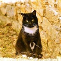 Кот,,,,просто Кот :: Юный Пионер Одиннадцатый