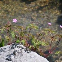 апрельские цветы :: Августа