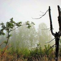 Лесной камертон :: Сергей Чиняев