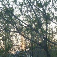 Деревья проснулись.... :: Татьяна Юрасова