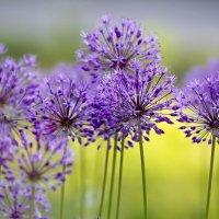 Цветы :: Татьяна Н.