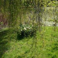Весна :: Алёна Савина