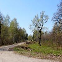 Деревенский пейзаж :: Катя Бокова