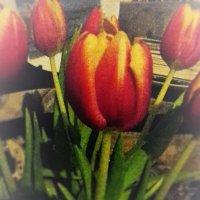 Тюльпан :: kuta75 оля оля