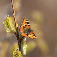 Весенний нектар :: Анатолий Иргл