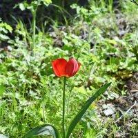 Не много о цветах в апреле... :: Михаил Болдырев