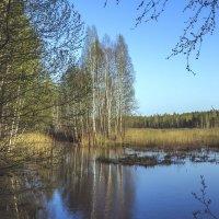 Природа Мещерского заповедника :: Сергей Цветков