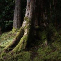 Дерево :: SvetlanaLan .