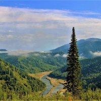 Пейзаж с пихтой и туманом :: Сергей Чиняев