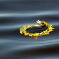 спасательный круг или одуванчики плывут... :: Александр Прокудин