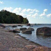 На побережье Финского залива :: Елена Павлова (Смолова)