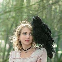 Черный ворон. :: Сергей Гутерман