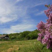 Вблизи Алексеевского леса :: оксана косатенко