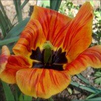 Оранжевый в полосочку :: Нина Корешкова