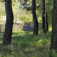 в тени деревьев :: оксана
