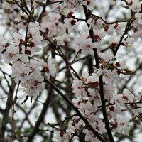 Весна. :: наталия