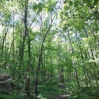 Весенний лес :: Елена Иванкина