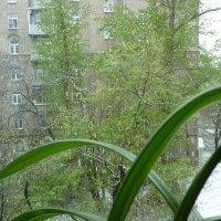 Майский снег за окном... :: Татьяна Юрасова