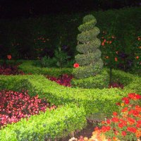 В ночном парке :: Марина Домосилецкая