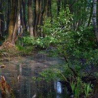 В майском лесу :: Сергей