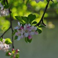 Весна :: Анна