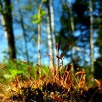 Цветущий мох :: Татьяна Черёмухина