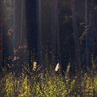 Где живут духи леса :: Ivanka Ivanka