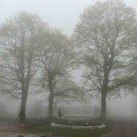 туман :: Михаил