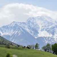 весна в горах :: Мария Климова
