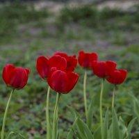 Опять цветочки :: Виктор Филиппов