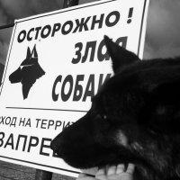 Не злая собака :: Светлана Шмелева