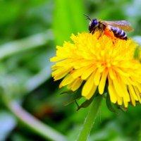 Села пчёлка на цветок, добывает вкусный сок. :: Валентина ツ ღ✿ღ