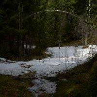 Лесной свод :: Таня Бакулина