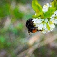 Сладкий нектар 3 :: Мария Букина