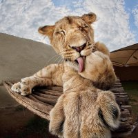 Про кошек :: Roman Mordashev