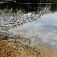 Весна везде: на ветвях и в воде :: Валерий Розенталь