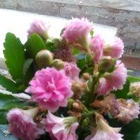 Цветы распустились - это значит скоро лето! :: Светлана Калмыкова