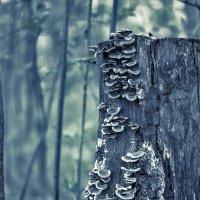 Пень лесной :: Ник Мелон