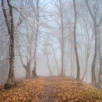 Лес голубого света :: Юрий Шевченко