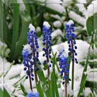 Весна :: Михаил Цегалко