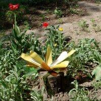 На цветочной грядке :: Нина Корешкова
