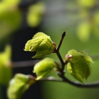 Весна - пора чудес, надежд и пробуждения природы... :: Ольга Русанова (olg-rusanowa2010)