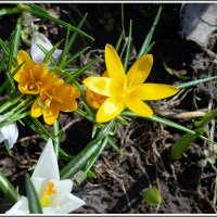 Мгновения весны *** :: muh5257