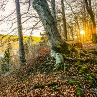 Декабрьский вечер в Тюрингском лесу.................... :: Александр Селезнев