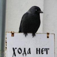 *** :: Валерия Тарасова