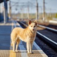 """""""Мне опять не легко,провожать и встречать поезда....."""" :: Владимир Кознов"""