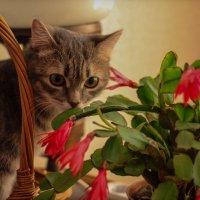 Любительница цветов :: Ириника