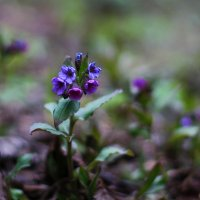 Первые цветы :: Мария Соколова