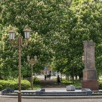 В городе цветет каштан :: Игорь Сикорский